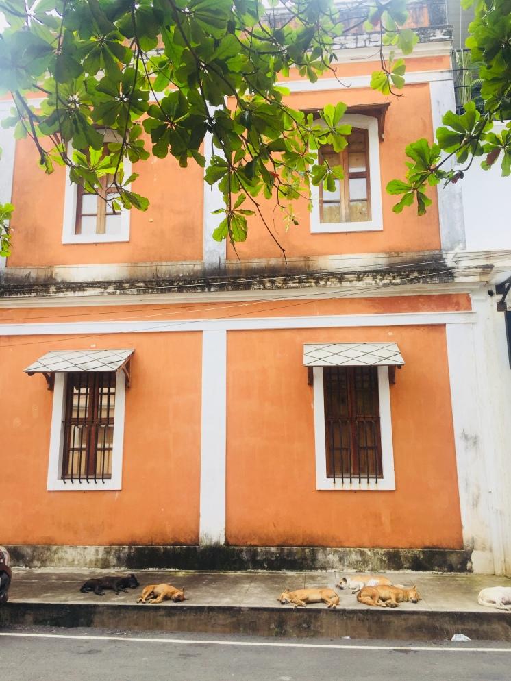Colonial buildings & sleeping dogs - Pondy